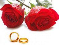 обручальные кольца и красные розы
