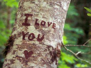 """надпись на дереве """"Я люблю тебя"""""""